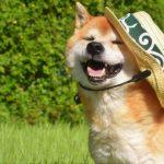 【ヒルナンデス】ペットアンブレラの通販・お取り寄せ方法!犬のお散歩用の傘!最新の傘(6月21日)