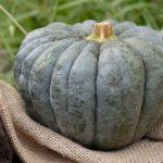【ノンストップ】ハロウィンかぼちゃのおばけ茶巾のレシピ!おしゃレシピ(10月30日)