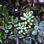 【ヒルナンデス】多肉植物インテリア!滝沢カレンさんや春日さんの作品は?【ハンドメイド主婦】