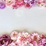 【ヒルナンデス】赤城南面千本桜の場所!ライトアップ時間は?桜と菜の花と芝桜の共演!桜の絶景名所スポットベスト7(3月18日)