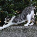【嵐にしやがれ】姿勢チェック方法と姿勢を元に戻す方法!【ゼロトレ】(2月9日)