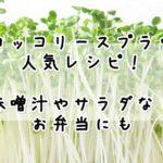ブロッコリースプラウトレシピ人気1位!味噌汁やサラダなど簡単な食べ方【20選】!お弁当にも!