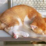 【ヒルナンデス】睡眠の質を上げる!体の内部の体温「深部体温」を上げる方法(5月27日)