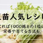 豆苗レシピ!人気【35選】つくれぽ1000越え殿堂入りの1位は?栄養や再生方法も