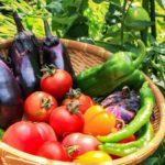 【あさイチ】帆立ての刺身サラダのレシピ!ペルーの定番料理!荻野恭子さん!みんなゴハンだよ(6月12日)
