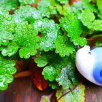 【あさイチ】レインポップ(rainpop)の通販・お取り寄せ方法!カフェで便利な傘の便利グッズ!カラフルなシリコン製ボール(6月4日)