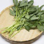 【あさイチ】モロヘイヤの栄養&簡単レシピ&保存方法!茎を使った料理も!モロヘイヤはお通じ改善、骨強化・ストレス軽減、疲労回復にも!(7月18日)
