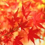 【ヒルナンデス】遊べる絶景紅葉!ランキングトップ5<1位は?>紅葉の見ごろはいつ?(11月5日)
